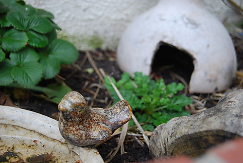 Toad's house2