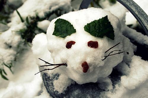 Snow medium