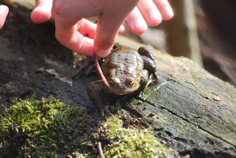 Feedingfrog