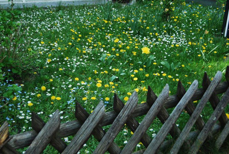 Bloominglawn