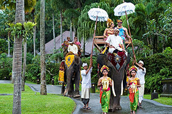 Elephant-park-lodge-serv