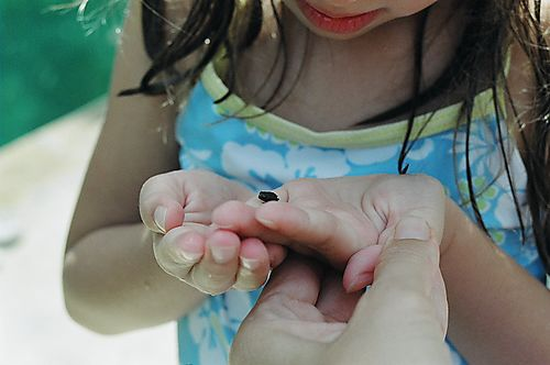 tiniest frog