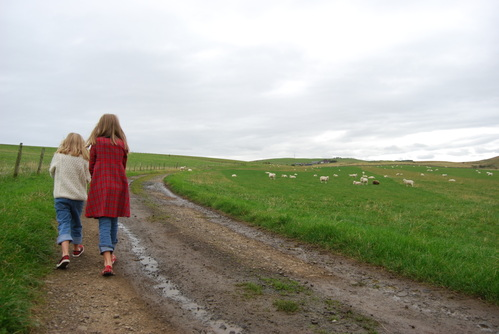 walking with the sheep
